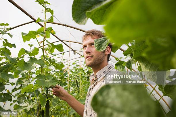Man in greenhouse, looking away