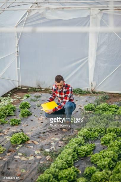 Hombre en greenhouse