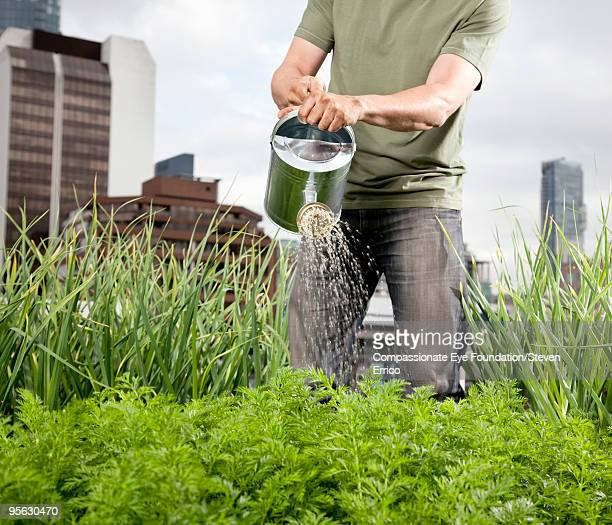 man in jeans watering plants - urban garden stock photos and pictures