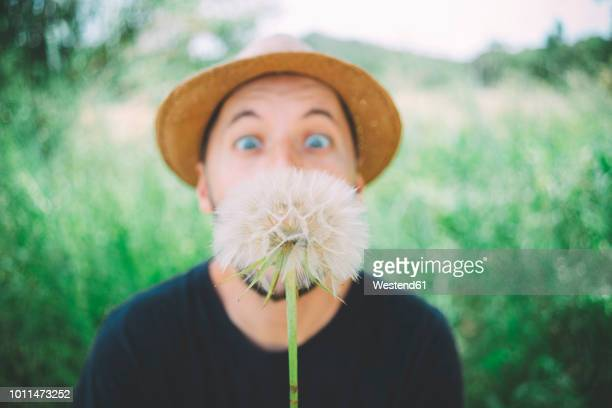 man in nature starring at blowball, close-up - printemps humour photos et images de collection