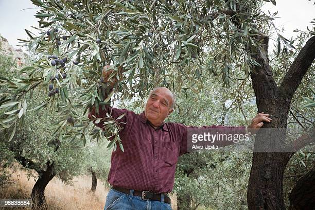 Man in olive grove, Greece