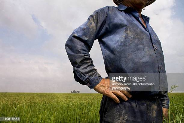 man in rice field. - mid section stock pictures, royalty-free photos & images