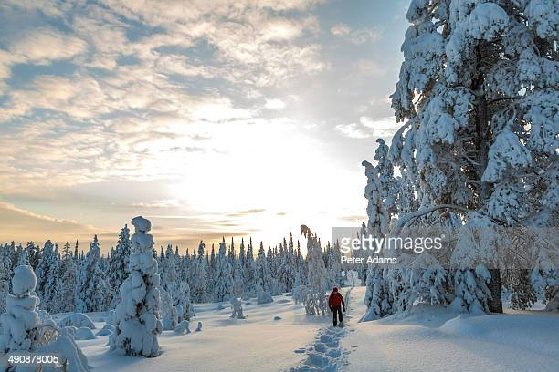 Man in snow covered forest, Riisitunturi, Lapland