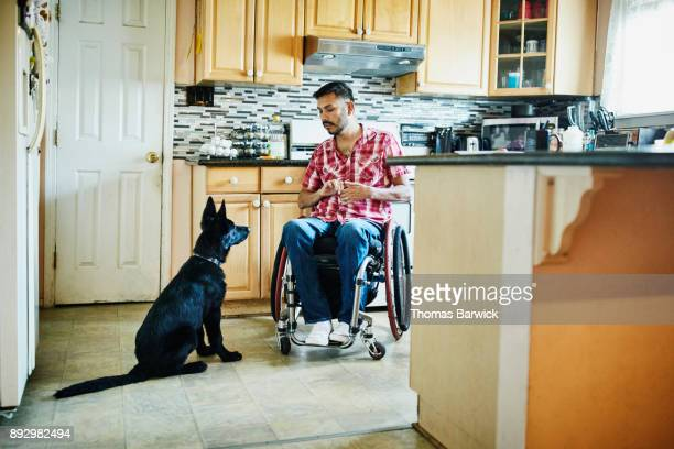 Man in wheelchair training dog in kitchen of home