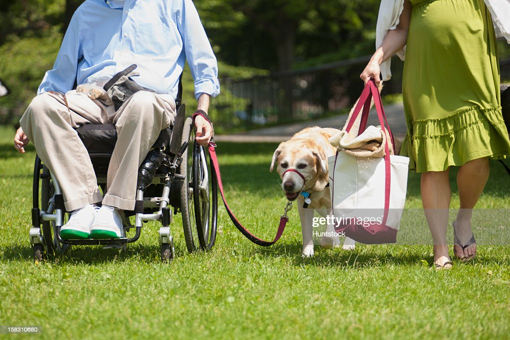 Man in wheelchair with spinal cord injury walking with service dog and pregnant wife : Stock Photo