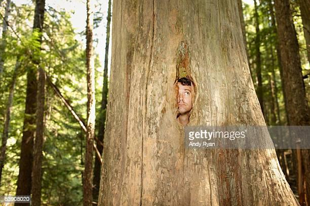 man inside tree, peering outthrough hole - undvikande bildbanksfoton och bilder