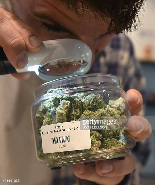 A man inspects a product with a magnifying glass at Farma a marijuana dispensary in Portland Oregon on October 4 2015 As of October 1 2015 a limited...