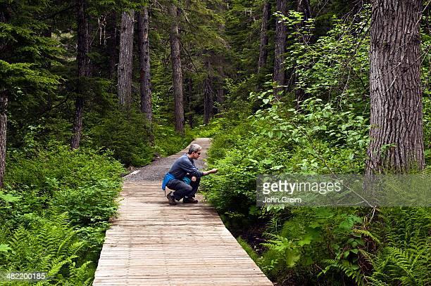Man inspects vegetation along hiking trail, Winner Creek, Chugach National Forest.