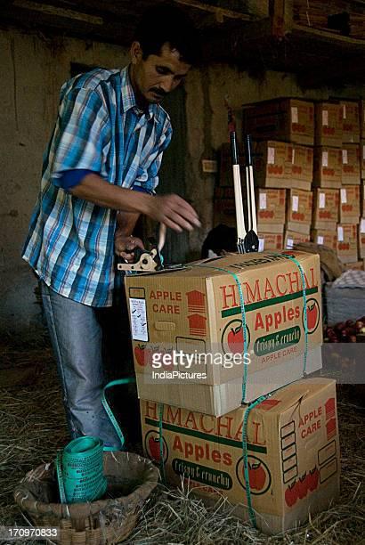 A man involved in apple packing in Shimla Himachal Pradesh India
