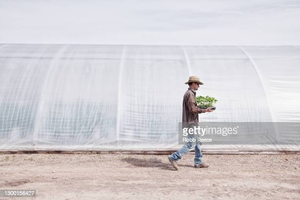 a man is carrying plants on an rural organic farm - robb reece stockfoto's en -beelden
