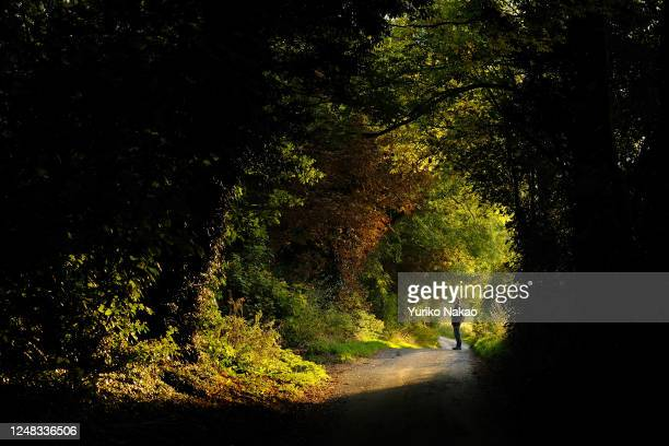 A man is pictured through trees and bushes glowing in the evening light in Avebury on October 3 2018 in Wiltshire England Avebury and Stonehenge and...