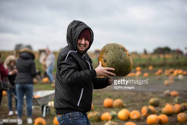 A man is pictured while searching for a pumpkin in the farm during the pumpkin festival Pumpkin market is one of the exiting things locals can...