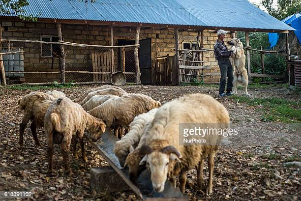 A man is playing with his dog in the yard in Anig village Qusar district Azerbaijan on 6 October 2016