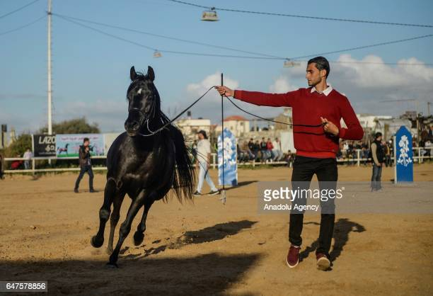 A man is seen next to a purebred Arabian horse during an event organized by a riding club in Gaza City Gaza on March 3 2017 Twenty Arabian horses...