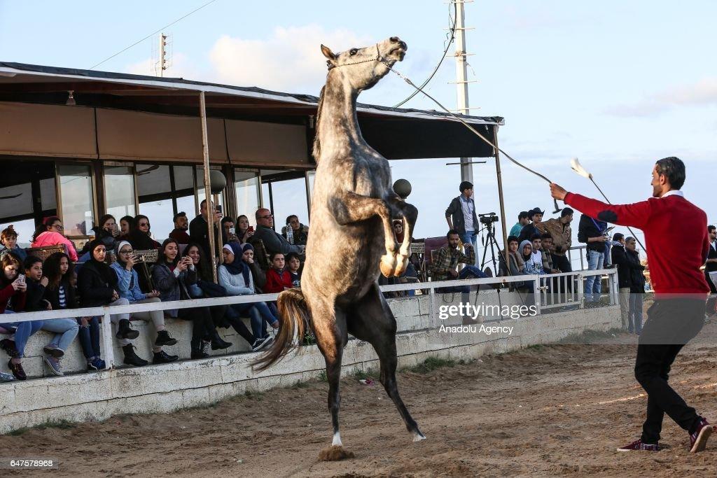 Purebred Arabian horse event in Gaza : News Photo