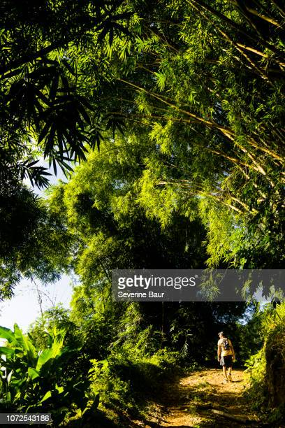a man is walking on a trail among bamboos, charlotteville, tobago, trinidad and tobago, west indies, south america - paisajes de trinidad tobago fotografías e imágenes de stock