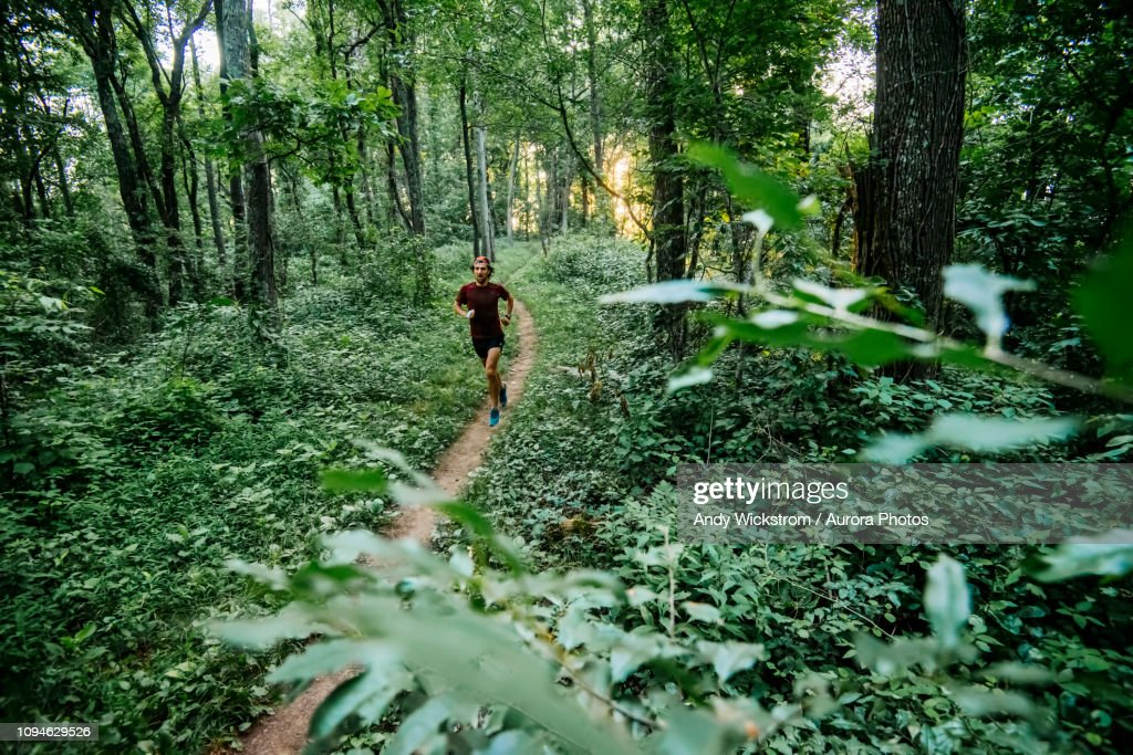 Man jogging in forest along Mountain to Sea Trail, Asheville, North Carolina, USA : Stock Photo