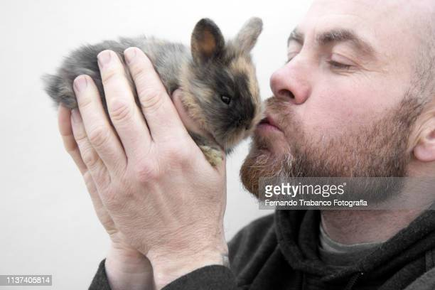 man kissing a rabbit - pet adoption stock pictures, royalty-free photos & images