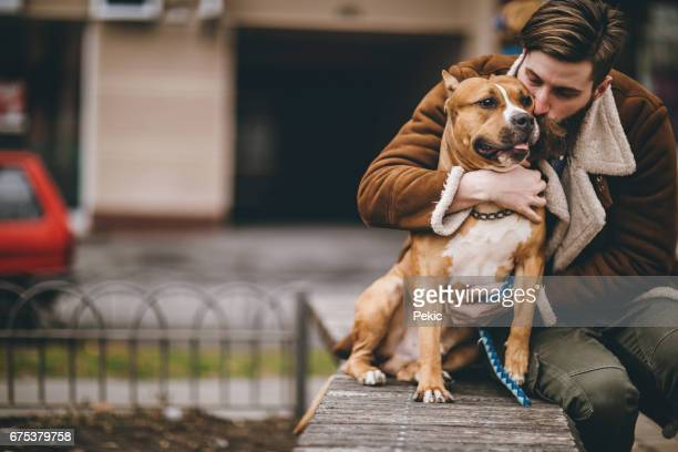 man kissing his furry best friend - pit bull terrier stock photos and pictures