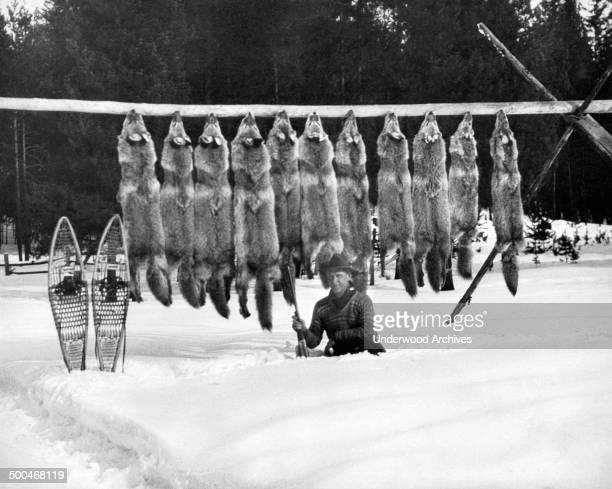 A man kneels in the snow in front of the eleven wolves he has shot and has strung up on a pole circa 1955