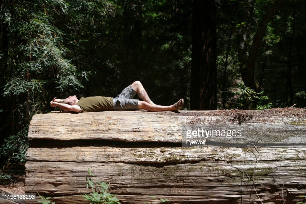 man laying down on a fallen redwood tree log in the woods - lying down stock-fotos und bilder