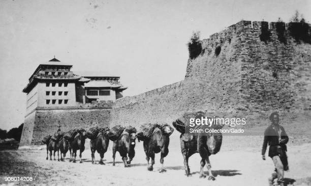 Man leading camel train under tartar wall Beijing China 1900 From the New York Public Library