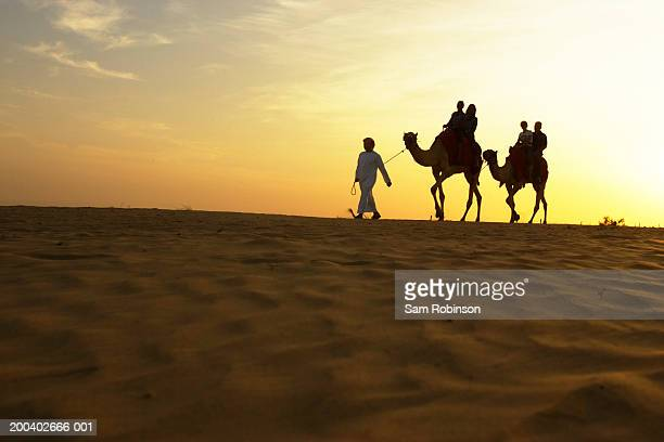 Man leading people riding on camels in desert, sunset