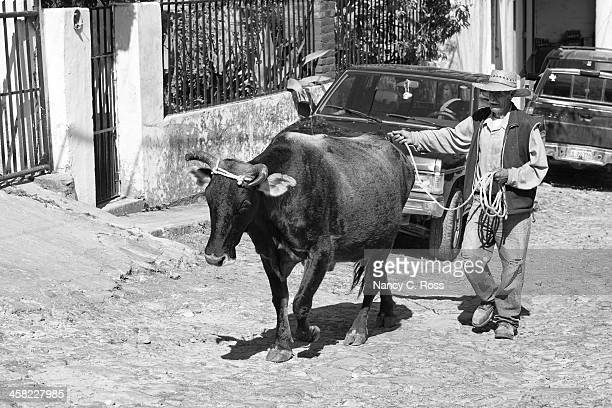 man leading steer up cobblestone street, san sebastian, mexico - mexico black and white stock pictures, royalty-free photos & images