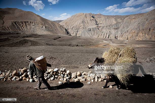 A man leads a stubborn horse in the village of Dhe Hidden in the rain shadow of the Himalaya in one of the most remote corners of Nepal lies Mustang...