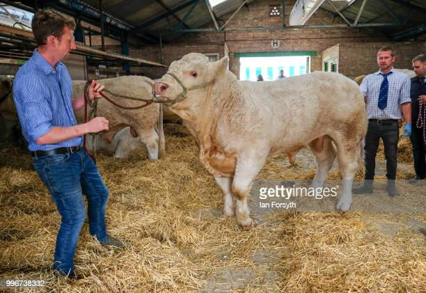 A man leads his bull out of the cow sheds during the 160th Great Yorkshire Show on July 10 2018 in Harrogate England First held in 1838 the show...