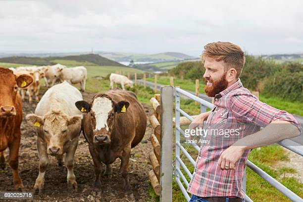 Man leaning against gate on cow farm looking away