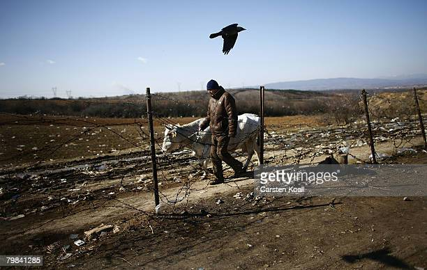 Man leaves an animal bazaar with a cow February 19, 2008 outside of Pristina, Kosovo. Albanians hope for improved economic opportunity in Kosovo....