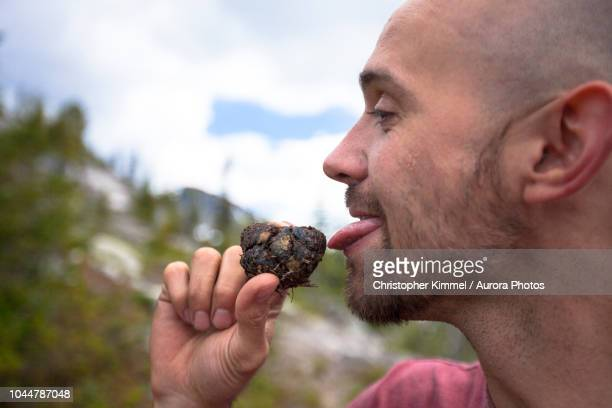 man licking bear scat while mountaineering, chilliwack, british columbia, canada - bear feces stock photos and pictures