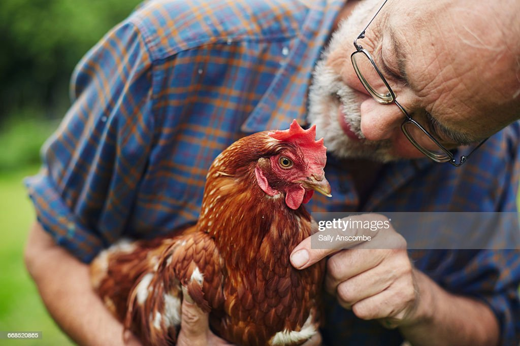 Man looking after his pet chicken : Stock Photo