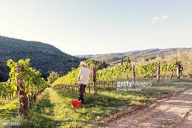 man looking at a sunny vineyard - südeuropa stock-fotos und bilder