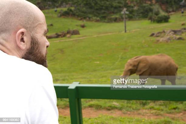 Man looking at an elephant on safari