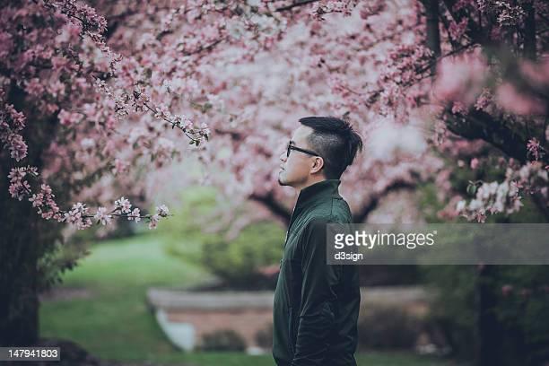 man looking at sakura flower - マーカム ストックフォトと画像
