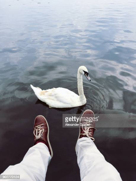 Man looking at swan in the lake from personal perspective