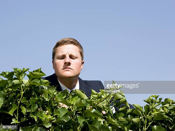 man looking over a hedge - 見渡す ストックフォトと画像