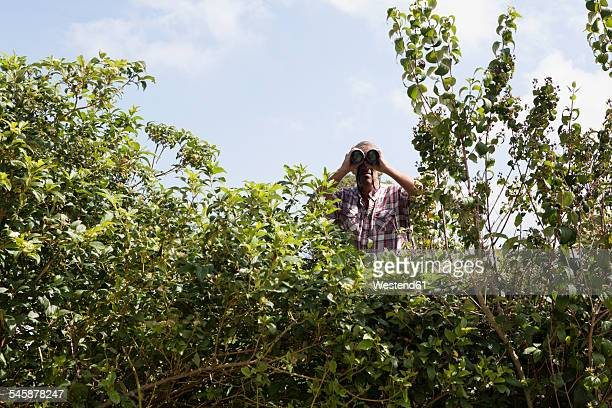 Man looking through binoculars over hedge
