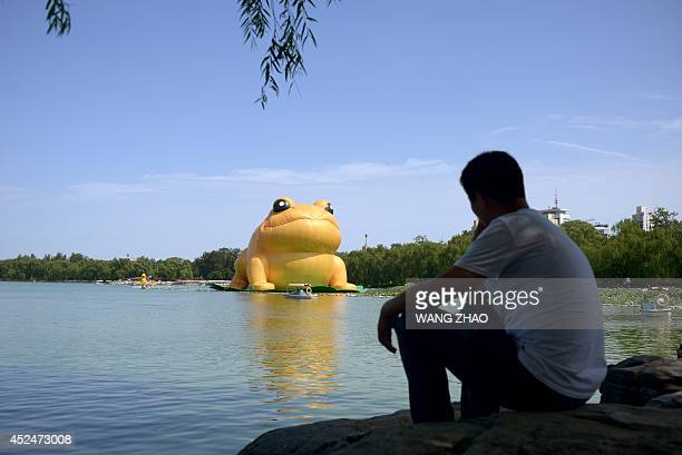 A man looks at a 22metre tall inflatable 'big golden toad' by Chinese artist Guo Yongyao from Ningbo displayed at Yu Yuan Tan Park in Beijing on July...