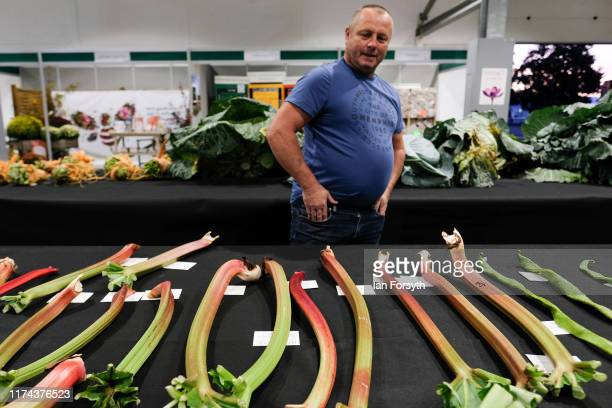 A man looks at a display of rhubarb during judging for the giant vegetable competition at the Harrogate Autumn Flower Show on September 13 2019 in...