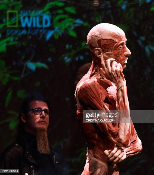 A man looks at a full plastinated body of a person on display at the 'Casino de la Exposicion' cultural center in Seville on November 30 on the eve...