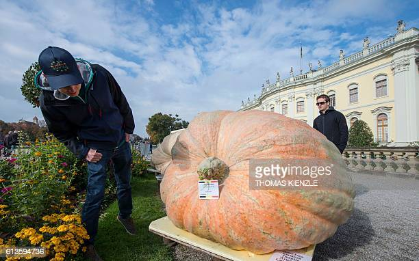 A man looks at a giant pumpkin which is participating at the Giant Pumpkin European Championship in Ludwigsburg southwestern Germany on October 9...