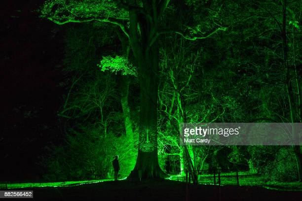 A man looks at a illuminated face on a tree at the launch of Enchanted Christmas attraction at Westonbirt Arboretum near Tetbury on November 29 2017...