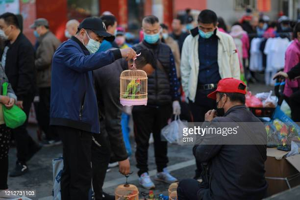 A man looks at a pair of parrots at a market in Shenyang in China's northeastern Liaoning province on May 12 2020 China's consumer inflation fell...