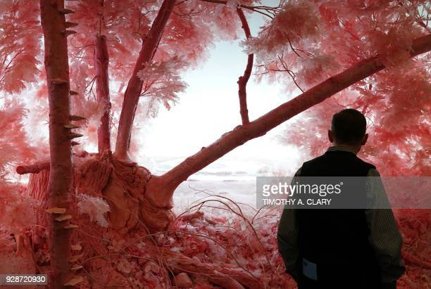"""Man looks at the work of artist Patrick Jacobs """" Pink Forest"""" during the press preview at the Armory Show March 7, 2018 at Pier 92/94 in New York. -..."""