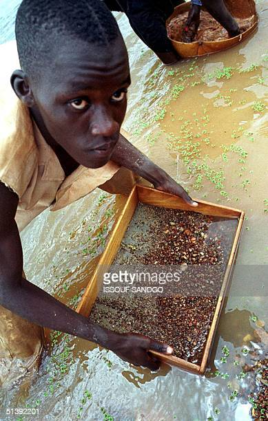 Man looks into his sifter to find a diamond stone, 12 June 2001 in Tortya, about 500 kilometres north of Ivory Coast's main city Abidjan. The one-way...