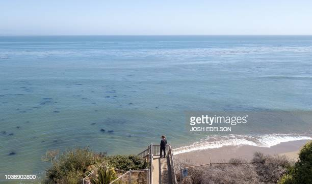 A man looks over Privates Beach in the Opal Cliffs area of Santa Cruz California on September 19 2018 Local officials charge a $100 annual fee for...