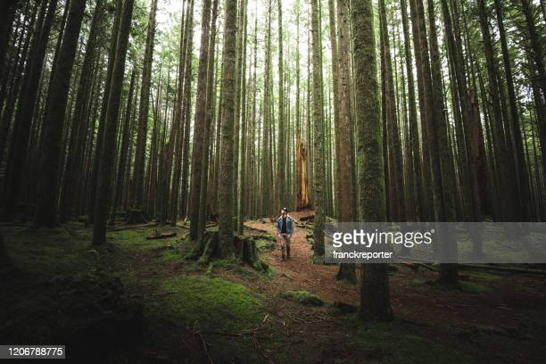 man lost in the forest - tall high stock pictures, royalty-free photos & images